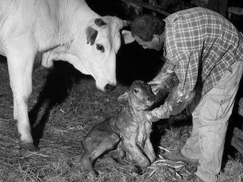 Italia: il mondo contadino in estinzione