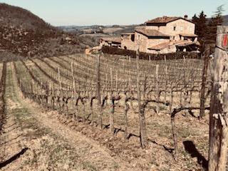 Le vigne dei coltivatori diretti sono ben assistite